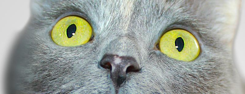 erste impfung katzen